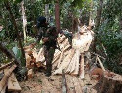 Diduga Hasil Ilegal Loging, Satgas Pamtas Yonif 642 Amankan Puluhan Kayu Olahan