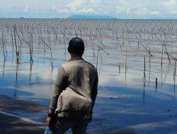 LPPN-RI Minta Kejati Kalbar Periksa Pejabat BPDAS Terkait Tanaman Mangrove